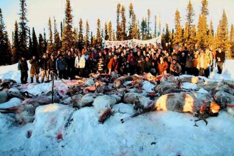 Labrador Innu Illegal Caribou Massacre, 2010 (Adam Randell-The Labradorian)