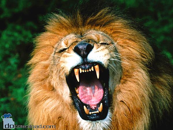 ferocious-lion