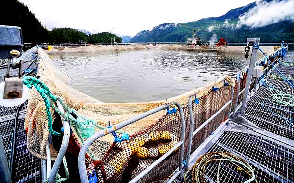 Fish Farm (BILL KEAY -- VANCOUVER SUN)